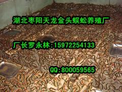 优惠的蜈蚣养殖|哪里能买到口碑好的蜈蚣养殖