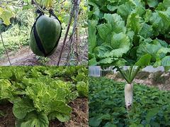 宝安有机蔬菜家庭配送——物超所值的深圳蔬菜上哪买
