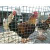 供应围栏网 养殖场围栏网 养殖场围栏价格 养殖场围栏直销