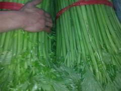 有機蔬菜-芹菜