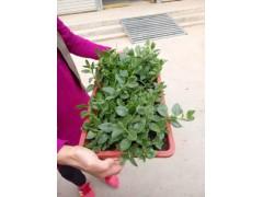 綠色有機無公害蔬菜配送
