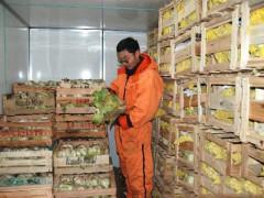 兰州蔬菜批发  兰州蔬菜配送中心  兰州新鲜蔬菜批发   兰州蔬菜种植基地  兰州热带水果代购