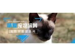 重庆宠物火化公司 专业宠物殡葬服务机构价格