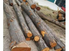 供应优质法桐楸木油椿木榆木等原木