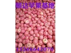山東優質紅富士蘋果供應批發價格行情哪里有價格低甜度高成色好