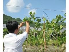 塑钢线【鼎喜塑钢线】托幕线-压膜线-大棚-温室-养殖-水产
