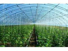 山西高质量的蔬菜大棚 山西蔬菜大棚哪家有