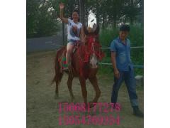 普通马驹多少钱一匹