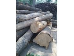 優質柏木國槐桑木等原木 適用于各種土材