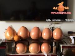 三紅柚子苗_選其山苗木:產量高的金桔蜜柚苗