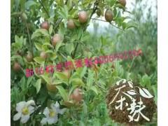 纯天然植物护发产品 纯天然植物养发产品 纯天然植物生发产品