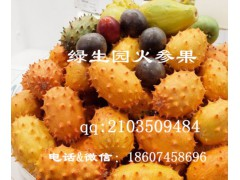 奇瓜異果刺角瓜(火星果)的栽培要點