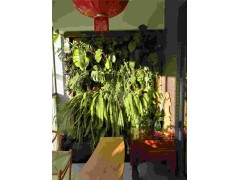 厦门墙体绿化批发价格|厦门墙体绿化供应商