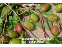 奇異莓(軟棗*桃)*種苗批發