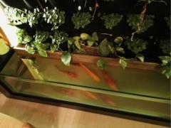 哪里能买到极好的厦门墙体绿化,厦门墙体绿化供应