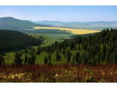 野韭菜戶外提供優質呼倫貝爾草原旅游服務|紅花爾基旅游