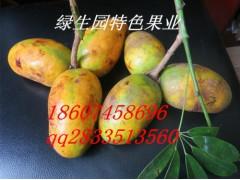 特色潛力水果苗  九月黃、黃金蕉