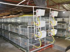 【宫家疃鸡笼】肉食鸡笼  鸡笼生产厂家  全自动三层清粪机