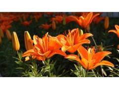 一流服務的農業生產|黑龍江種子種植18845768584|益農化肥