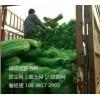 河南郑州盖土网哪家好/河南郑州盖土网生产厂家