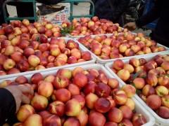 万亩黄肉白肉油桃产地批发价格哪里有