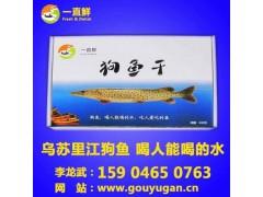 哈爾濱狗魚一直鮮狗魚