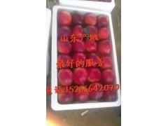 哪里有油桃市場 哪里油桃批發價格便宜 去哪里批發油桃好