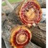 优质槐木香椿木苦楝木枣木梧桐木等原木