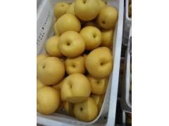 豐水梨產地 供應優質豐水梨