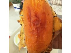 哪里有批發紅薯的找昌樂縣趙德強
