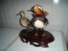 鑫龍動物標本制作_孔雀標本、山雞標本制作就找鑫龍動物標本