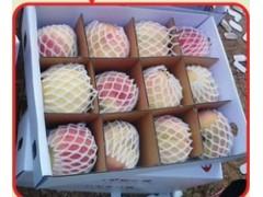 民吉沂蒙霜红桃-知名的沂蒙霜红桃批发商|沂蒙霜红桃价格超低