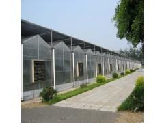 全国供应阳光板温室大棚  温室大棚价格  新型温室