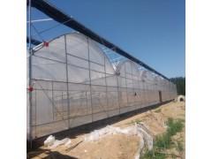 薄膜温室  温室大棚  薄膜温室造价  大棚厂家