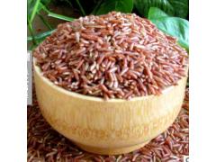 骆驼背上杂粮营养丰富红米