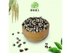 绿色健康五谷杂粮黑玉米