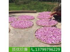 江西石斛兰盆栽批发价,江西吉安哪里有卖石斛兰
