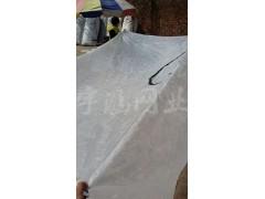 供应隽格60目青蛙专用围网 隐形塑料窗纱网 防蚊窗纱