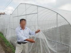 批发隽格 蚂蚱网 蚂蚱养殖纱网蝗虫大棚网罩 大棚养殖网