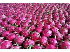 山东樱桃种苗销售