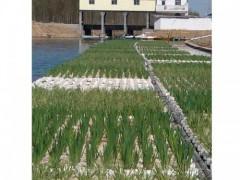 供應河北超值的生態浮島——生態浮床