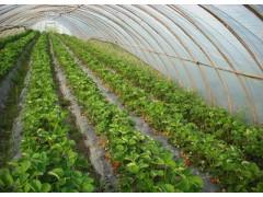 知名的西瓜专用膜供应商|黄瓜专用膜厂家