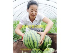 供应潍坊优质的西瓜专用膜,大型农膜生产企业
