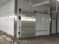 山东速冻机-潍坊品牌好的速冻机批售