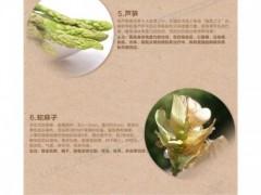 福建销量好的純植物粉护垫价位——江西純植物粉护垫厂家