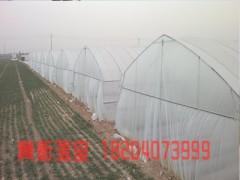 遼寧地區好的大棚薄膜-遼陽大棚薄膜