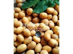 迷你小土豆供应商推荐——甘肃全境批发油炸小土豆