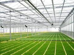 纹络温室工程专业建设厂家