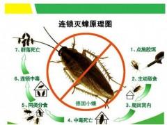 厦门欣态教你家庭虫害如何防治