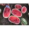 买西瓜籽就到新民市科旺种子